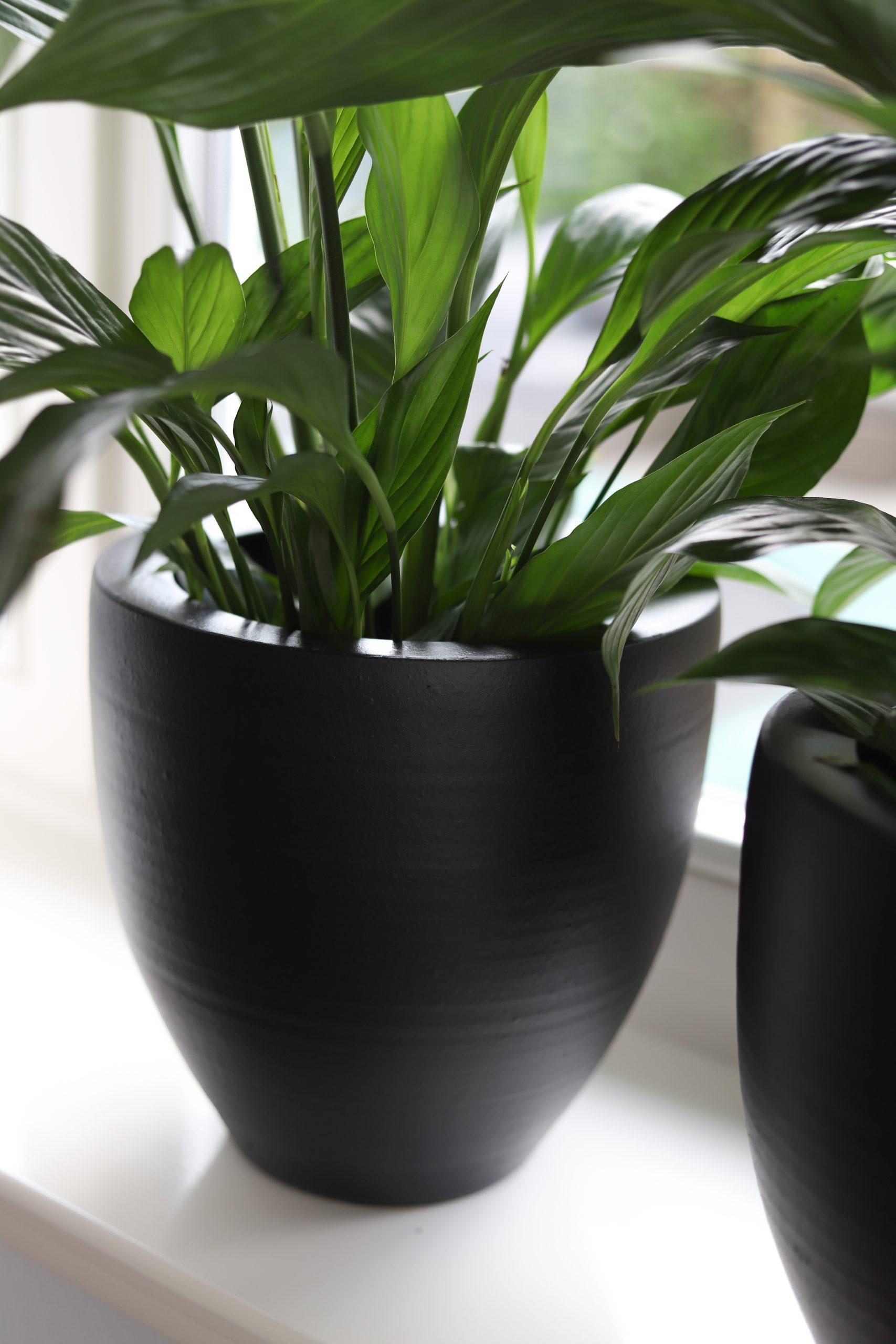 Bekijk alle Athene mat zwarte en witte potten, vazen en schalen