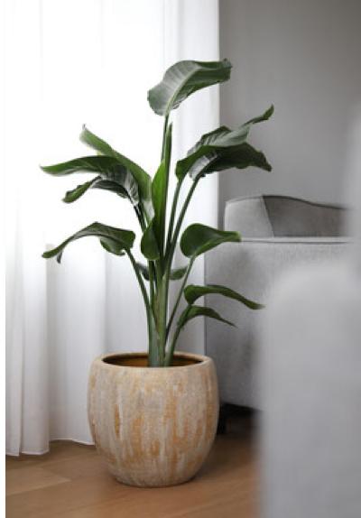 Sfeerfoto Montano oker met plant